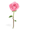 rose-icon.png